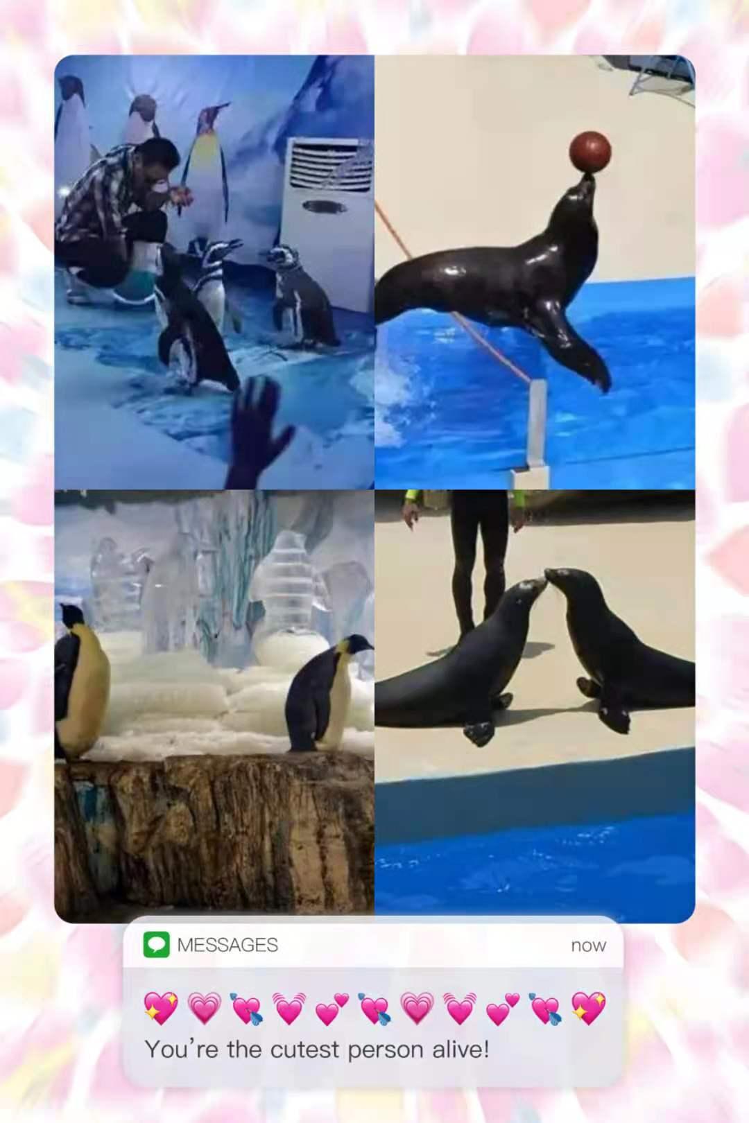 福建省海洋生物鱼缸展览租赁