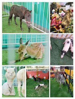 临江市现有档期动物表演出租